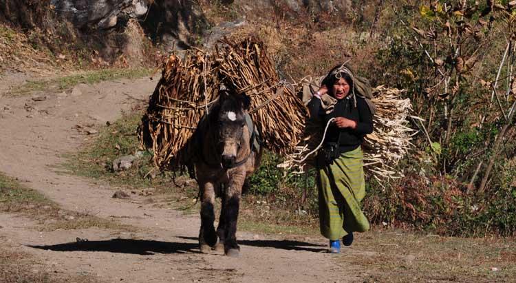 Daphne transport for Longkhar